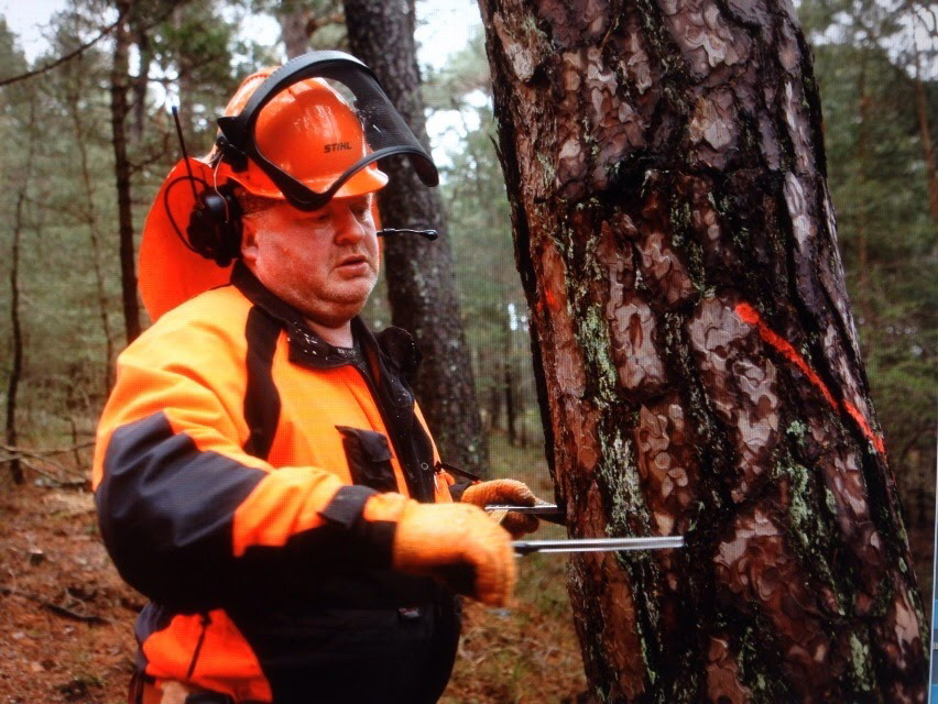 Baumbemessung - Guido Sprenger Forstservice