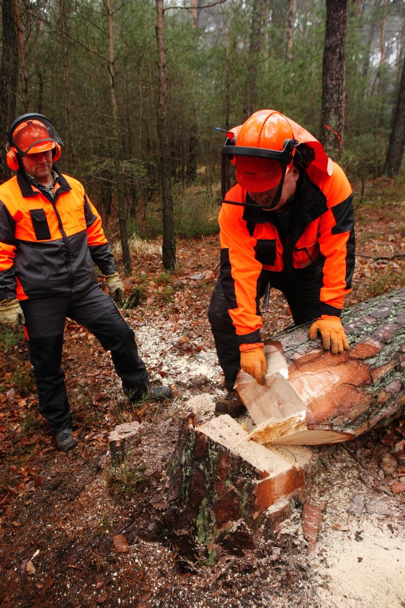 Baumfällung erfolgreich - Guido Sprenger Forstservice