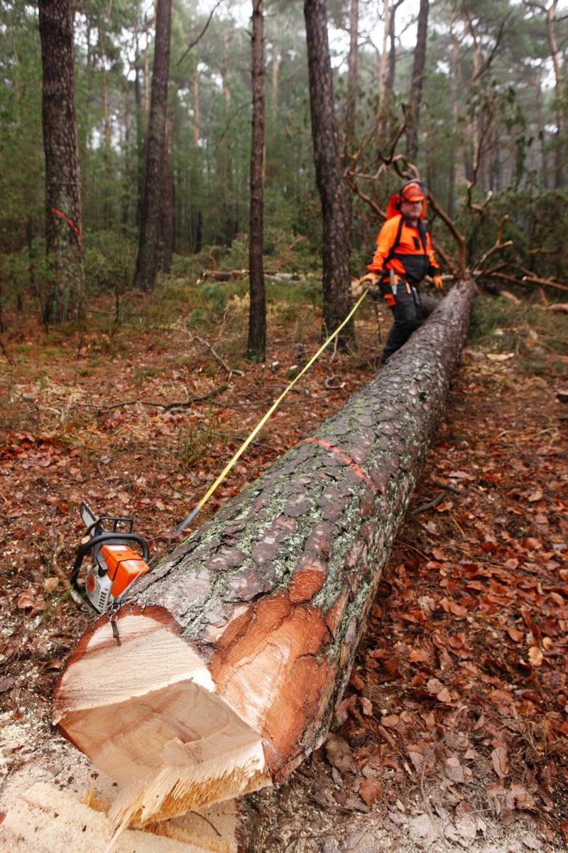 Baumfällung - Guido Sprenger Forstservice